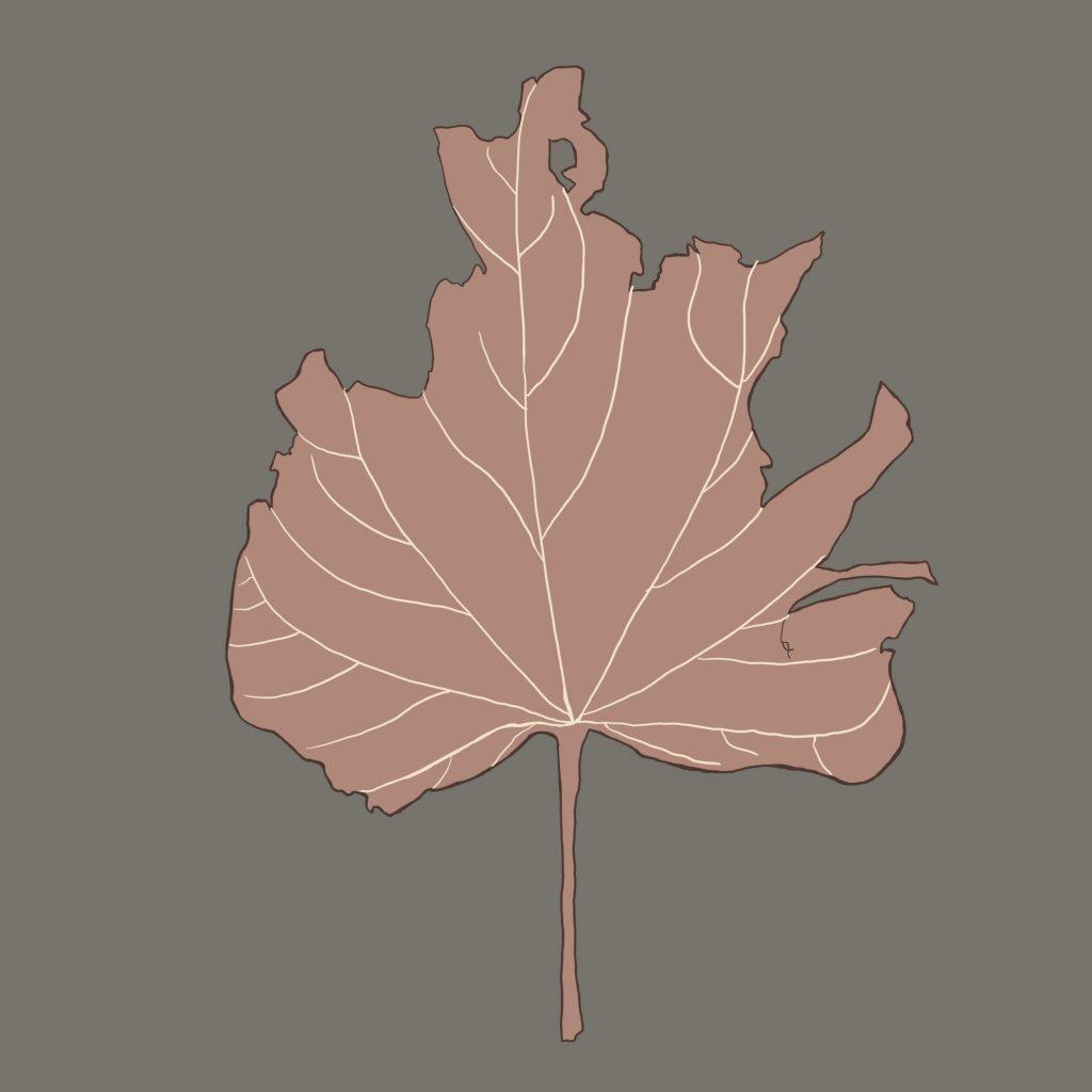 Illustrated Leaf